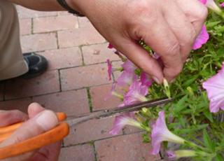 園芸療法の写真